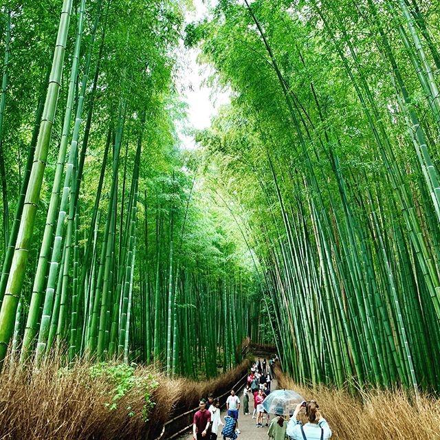 女子旅で京都に行くならここはいっておきたい